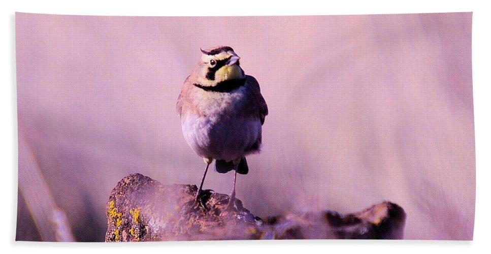 Birds Bath Sheet featuring the photograph An Searching Gaze by Jeff Swan