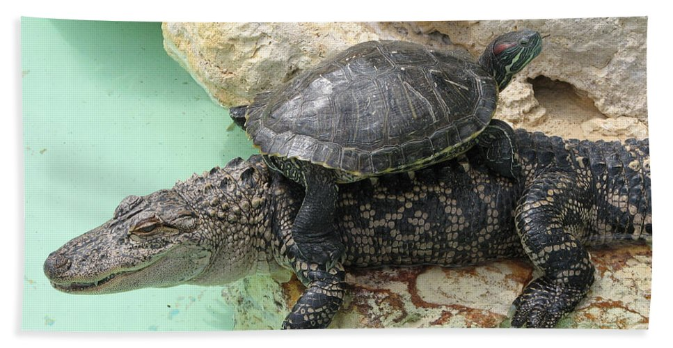 Turtle Bath Sheet featuring the photograph An Unlikely Pair by Stacey May