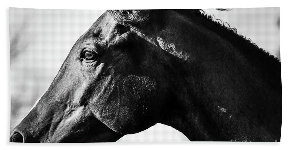 Horse Bath Sheet featuring the photograph And Embers Rise by Genna Card