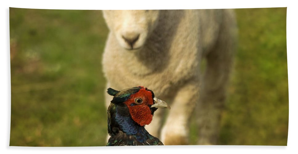Lamb Hand Towel featuring the photograph And Who Are You by Angel Ciesniarska