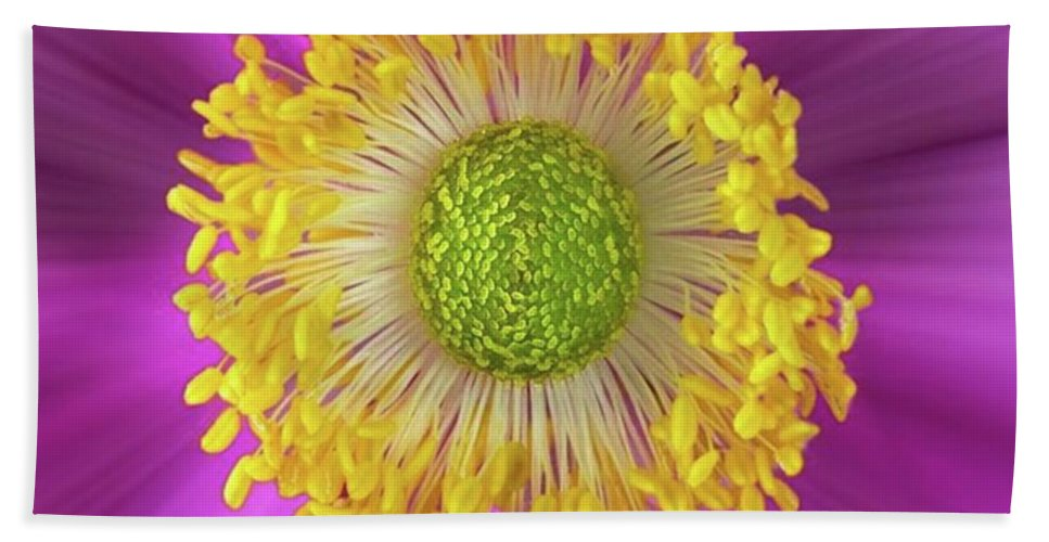 Beautiful Bath Towel featuring the photograph Anemone Hupehensis 'hadspen by John Edwards