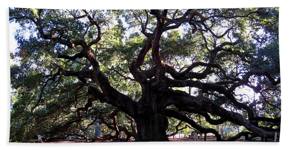 Photography Hand Towel featuring the photograph Angel Oak II by Susanne Van Hulst
