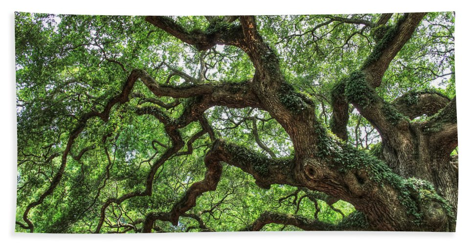 Trees Hand Towel featuring the photograph Angel Oak by Ronald Kotinsky