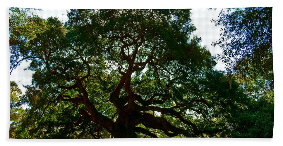 Tree Hand Towel featuring the photograph Angel Oak Tree 2004 by Louis Dallara