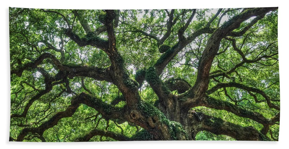 Trees Hand Towel featuring the photograph Angel Oak Tree by Ronald Kotinsky