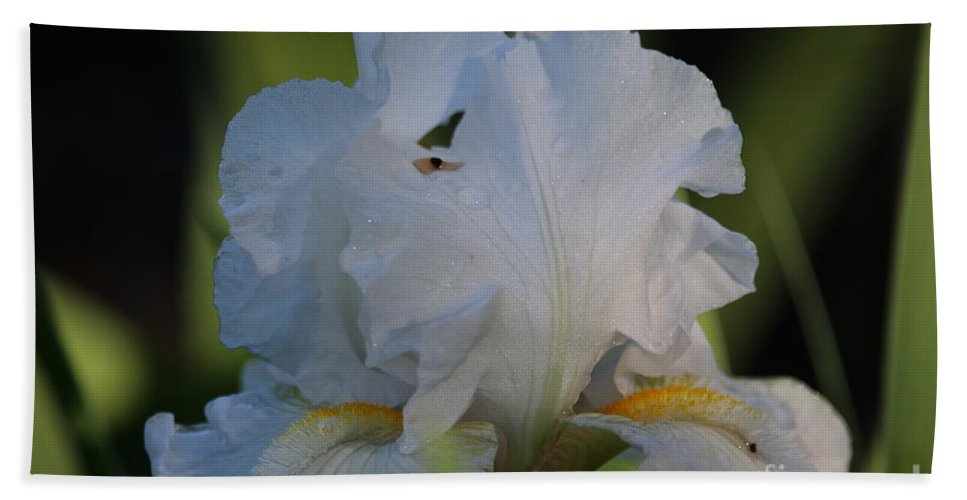 Flower Hand Towel featuring the photograph Angel Wing Iris by Susan Herber