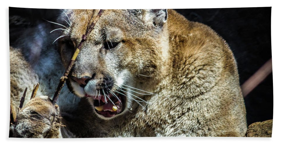 autentyczny super tanie nowe promocje Angry Puma Bath Towel