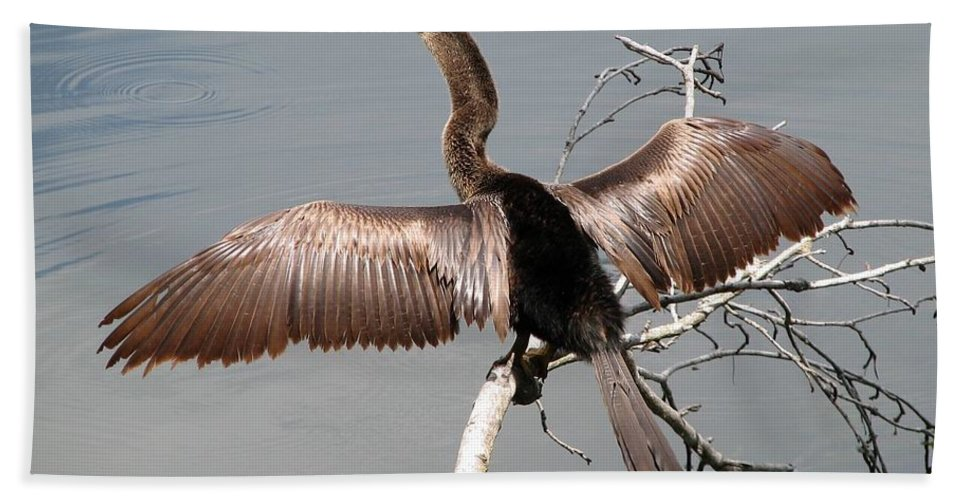 Anhinga Hand Towel featuring the photograph Anhinga by J M Farris Photography