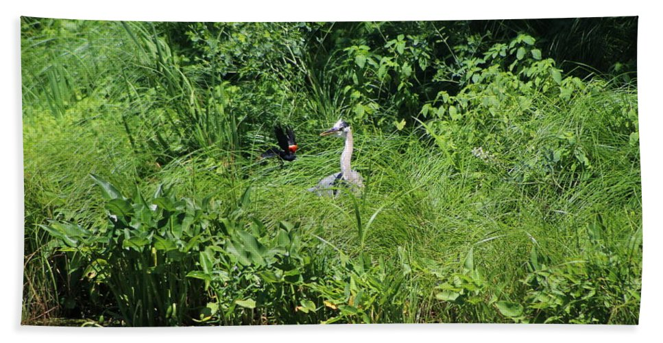 Marsh Bath Towel featuring the photograph Annoyed - Heron and Red Winged Blackbird 5 of 10 by Colleen Cornelius