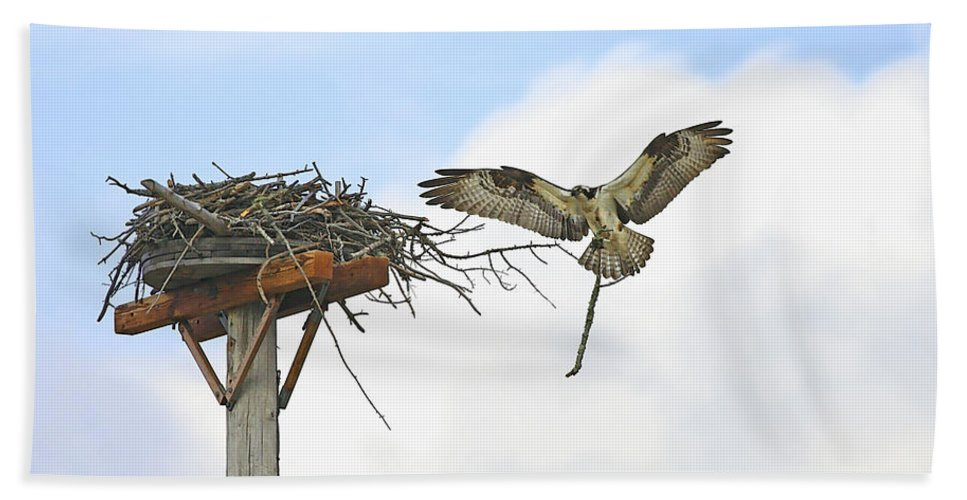 Osprey Hand Towel featuring the photograph Another Twig For The Nest by Deborah Benoit