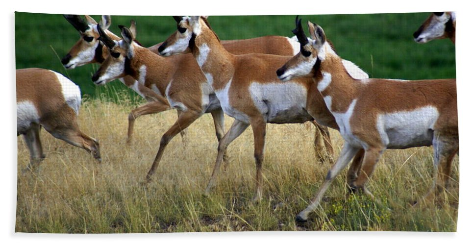 Wildlife Bath Sheet featuring the photograph Antelope 1 by Marty Koch