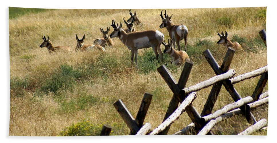 Wildlife Hand Towel featuring the photograph Antelope 2 by Marty Koch