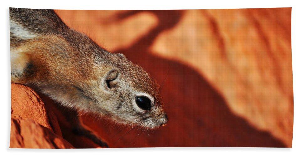 Antelope Ground Squirrel Bath Sheet featuring the photograph Antelope Ground Squirrel II by Kyle Hanson