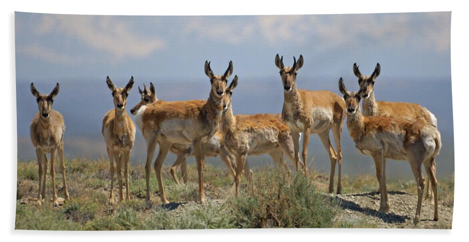 Antelope Bath Sheet featuring the photograph Antelope by Heather Coen
