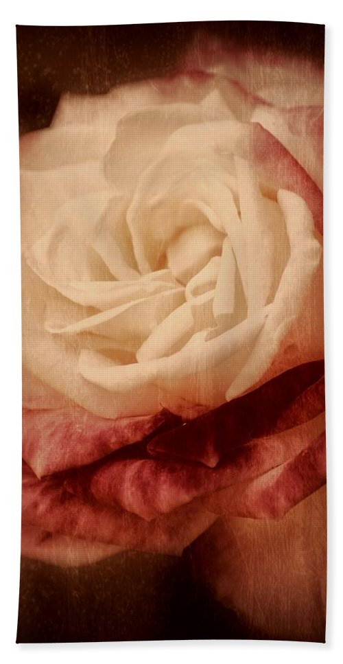 Roses Bath Sheet featuring the photograph Antique Rose - In Full Bloom by Angie Tirado