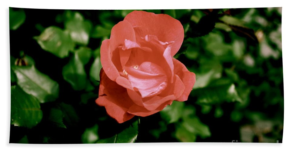 Rose Hand Towel featuring the photograph Antique Rose by Sherri Williams