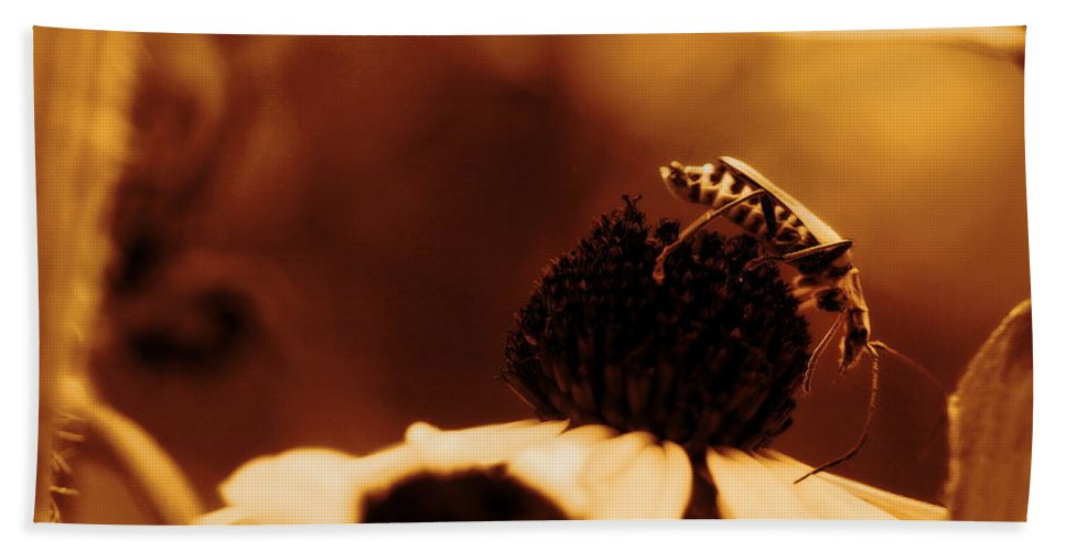 Leatherwing Bath Sheet featuring the photograph Anyone Else Down There - Gold Glow by Angela Rath