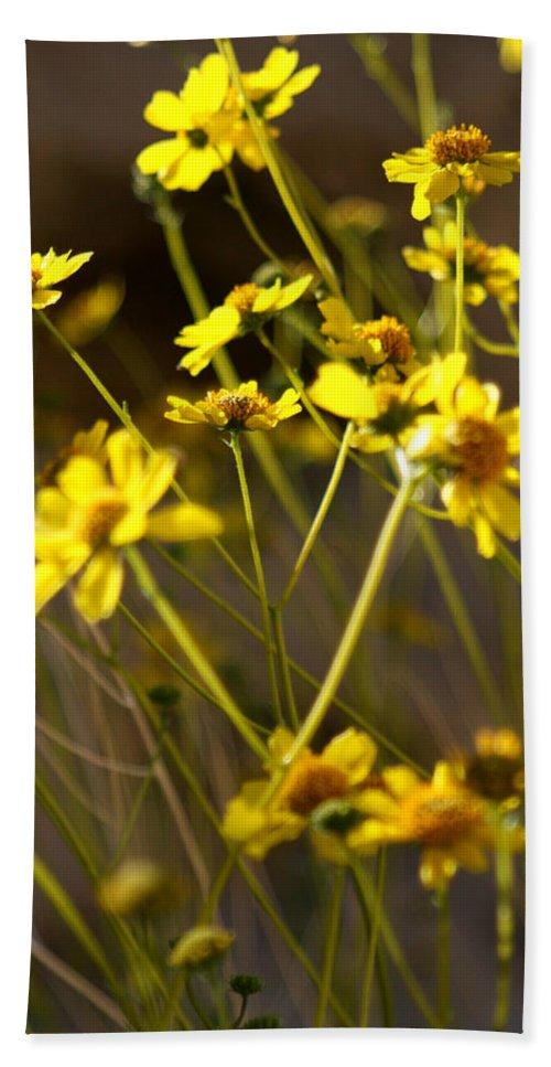 Desert Sunflower Hand Towel featuring the photograph Anza Borrego Desert Sunflowers 1 by Chris Brannen
