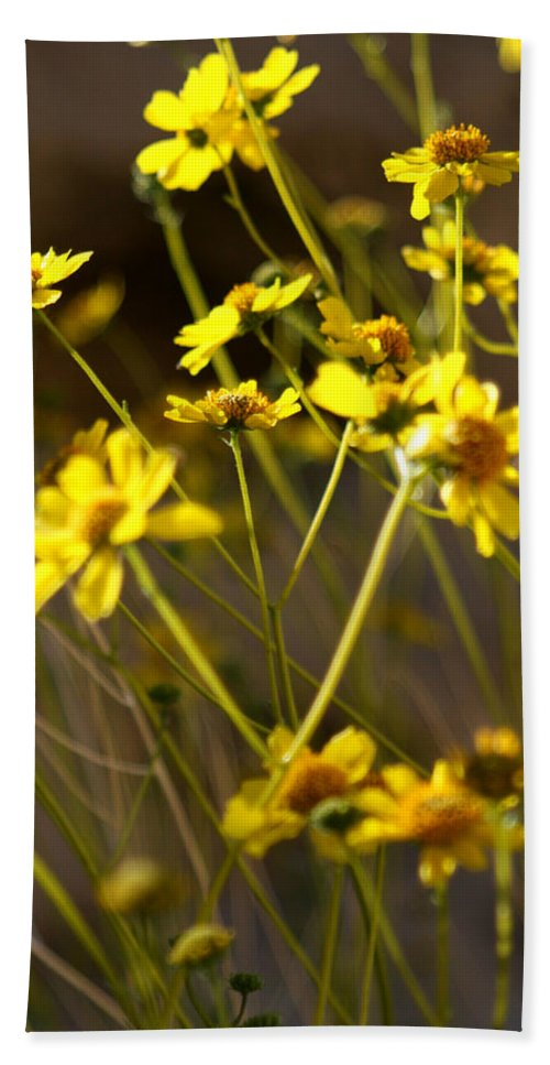 Desert Sunflower Bath Sheet featuring the photograph Anza Borrego Desert Sunflowers 1 by Chris Brannen