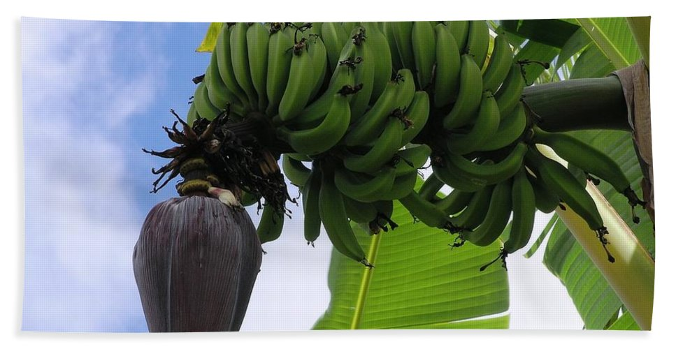 Green Bath Towel featuring the photograph Apple Bananas by Mary Deal