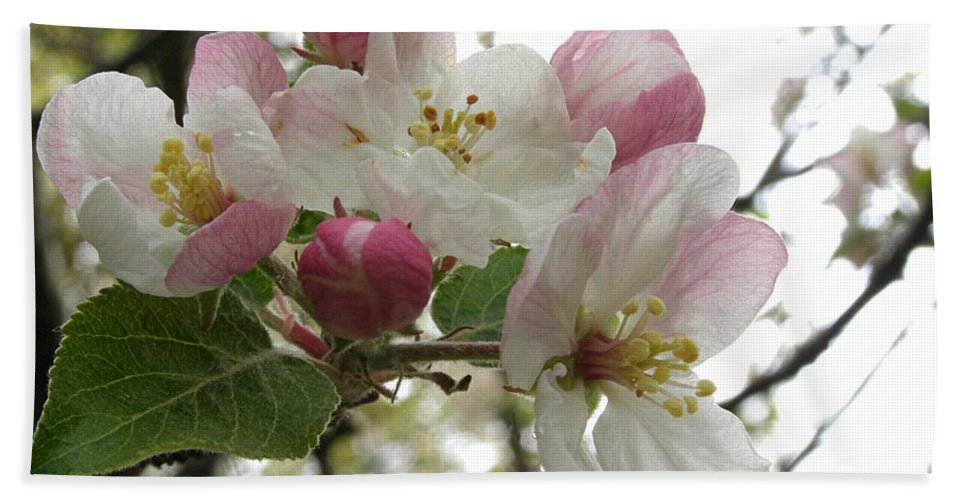 Apple Blossoms Bath Sheet featuring the photograph Apple Blossoms - Wild Apple by Angie Rea