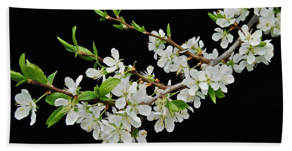 Apple Hand Towel featuring the photograph Apple Blossoms 2 by Michael Peychich