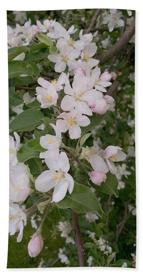 Apple Hand Towel featuring the photograph Apple Tree In Bloom by Tammy Finnegan