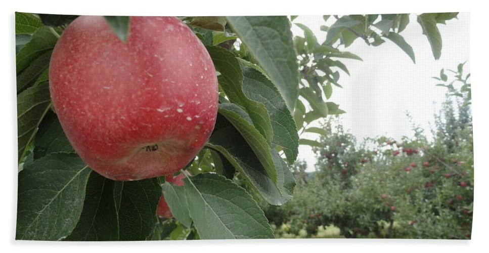 Apples Hand Towel featuring the photograph Apples 101010 by Trish Hale