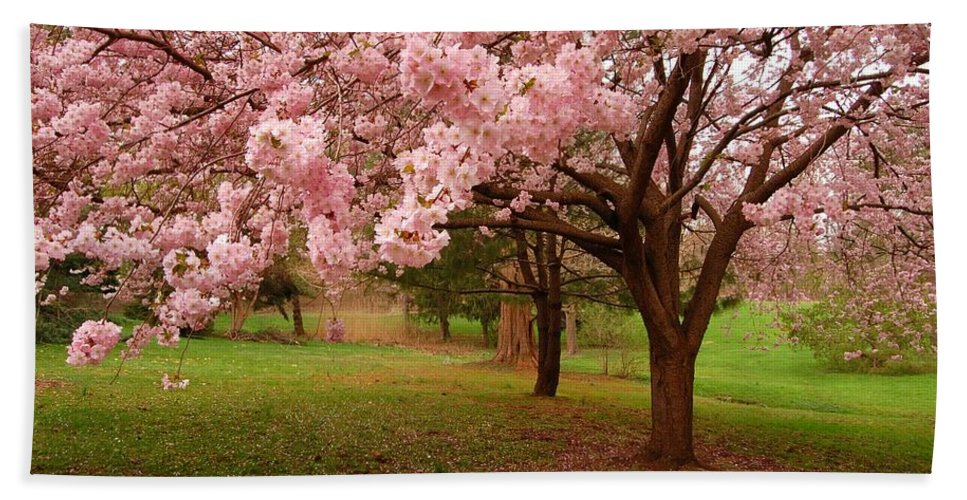 Cherry Blossoms Bath Sheet featuring the photograph Approach Me - Holmdel Park by Angie Tirado