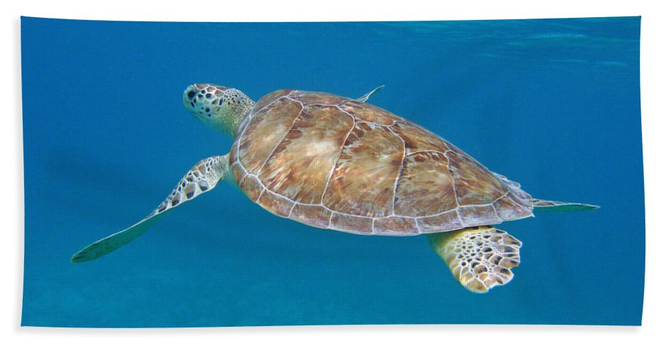 Green Sea Turtle Hand Towel featuring the photograph Aqua Glider by Kimberly Mohlenhoff