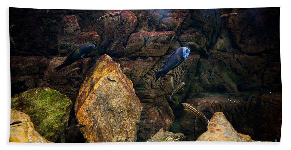 Zoo Bath Sheet featuring the photograph Aquarium Stones Arrangement by Arletta Cwalina