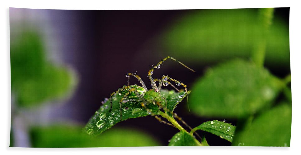 Clay Hand Towel featuring the photograph Arachnishower by Clayton Bruster