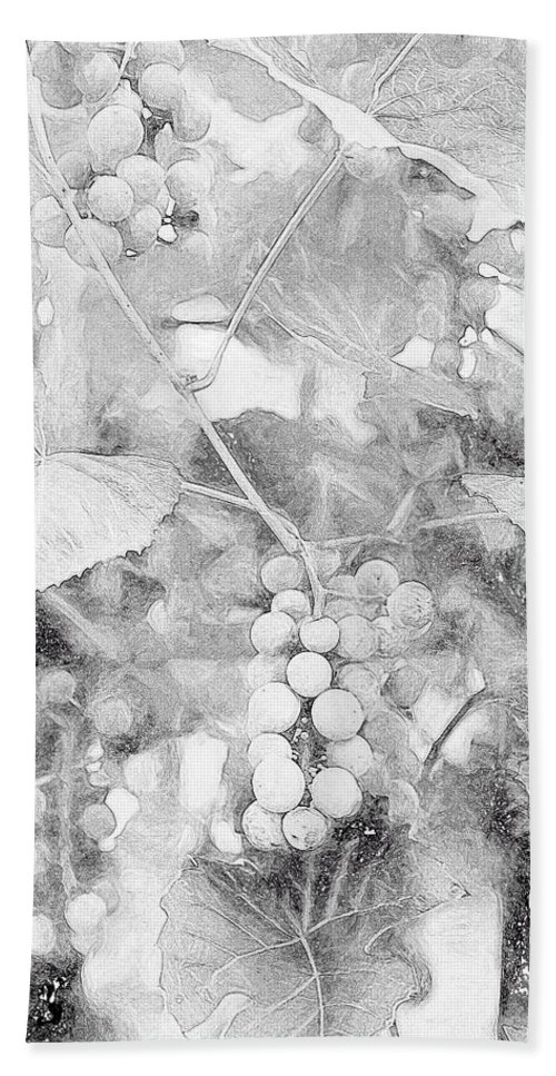 Grapes Bath Sheet featuring the digital art Arbor Grapes Sketch by Theresa Campbell