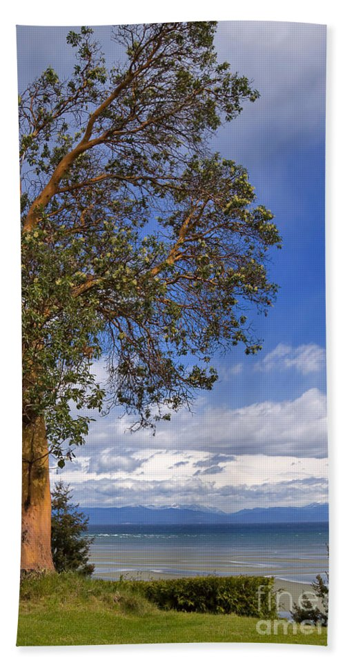 Tree Hand Towel featuring the photograph Arbutus Tree At Rathtrevor Beach British Columbia by Louise Heusinkveld