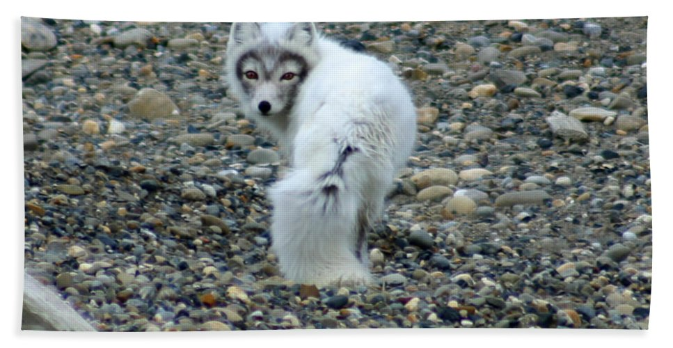 Alaska Bath Sheet featuring the photograph Arctic Fox by Anthony Jones
