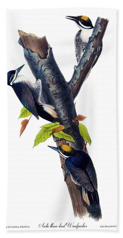 Arctic Three Toed Woodpecker Hand Towel featuring the painting Arctic Three-toed Woodpecker Audubon Birds Of America 1st Edition 1840 Octavo Plate 268 by Orchard Arts