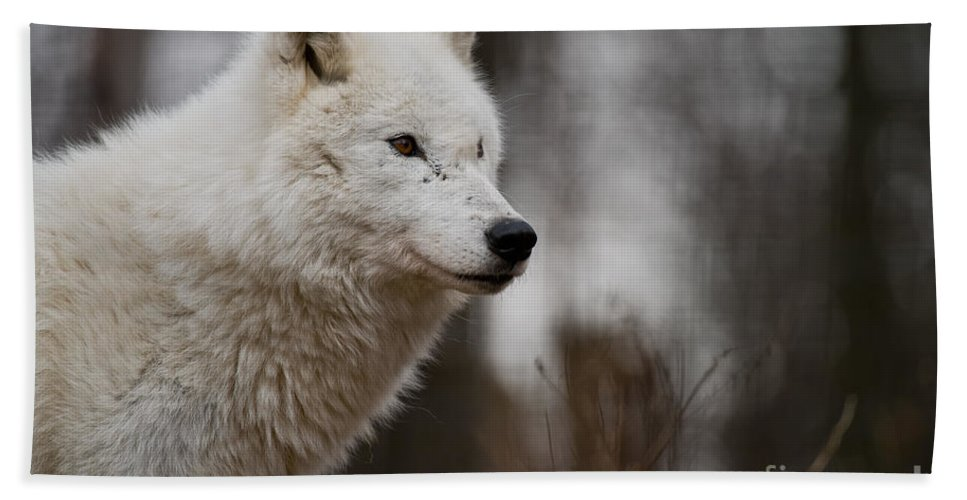 Arctic Wolf Bath Towel featuring the photograph Arctic Wolf Pictures 1242 by World Wildlife Photography