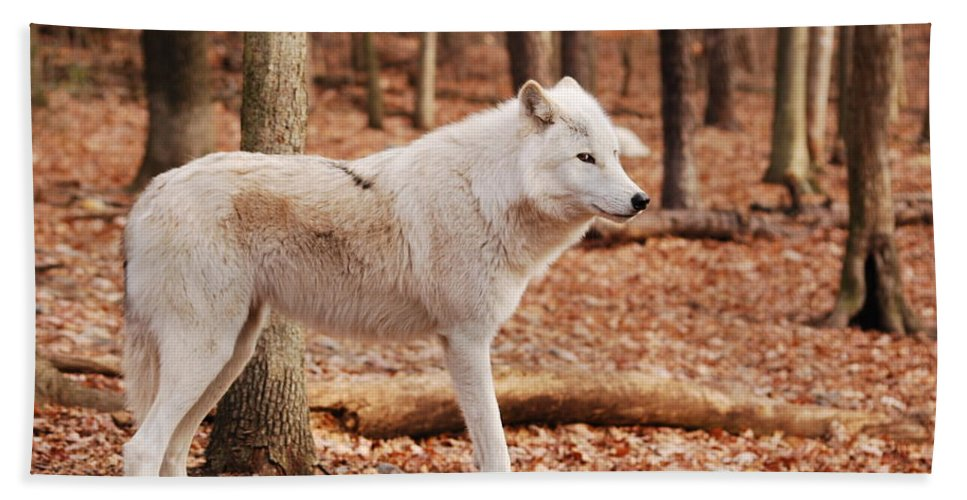 Wolf Hand Towel featuring the photograph Are You Talking To Me by Lori Tambakis