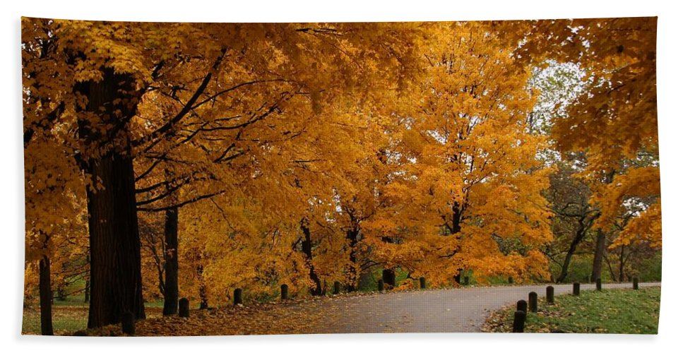 Leaves Bath Towel featuring the photograph Around The Bend by Lyle Hatch
