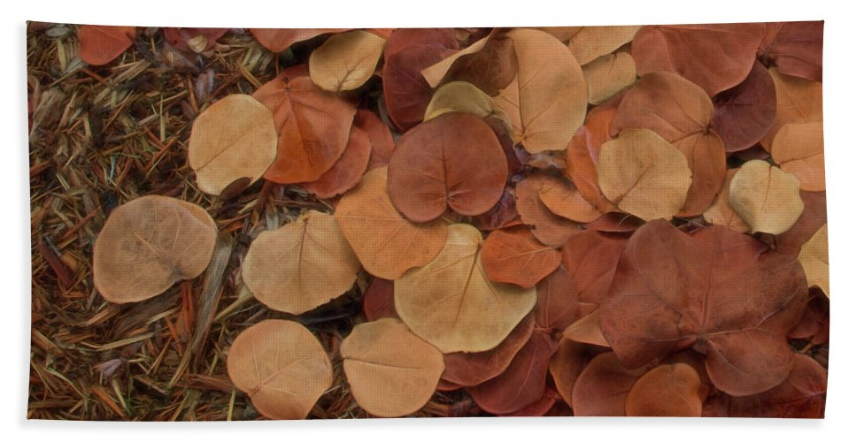 Sea Bath Sheet featuring the photograph Artfully Scattered Sea Grape Leaves by Mitch Spence