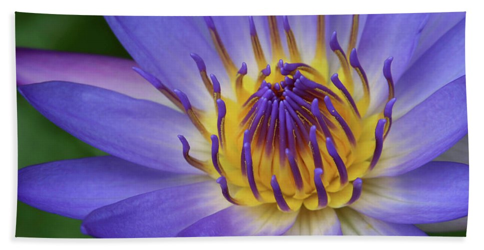 Waterlily Hand Towel featuring the photograph The Lotus Flower by Sharon Mau