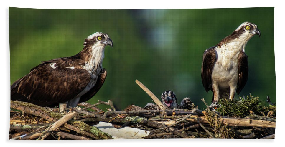 Osprey Hand Towel featuring the photograph Osprey Family Night by Gary E Snyder
