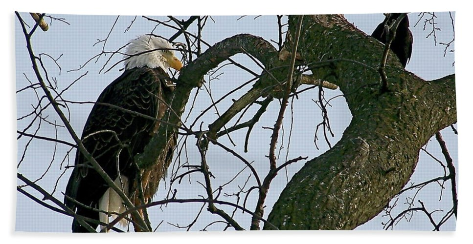 Nature Photography Bath Sheet featuring the photograph As The Eagle Looks On by Sue Stefanowicz
