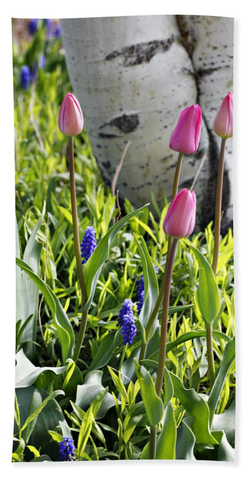 Aspen Bath Sheet featuring the photograph Aspen And Tulips by Marilyn Hunt