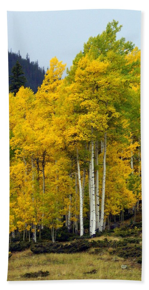 Fall Colors Hand Towel featuring the photograph Aspen Fall 3 by Marty Koch