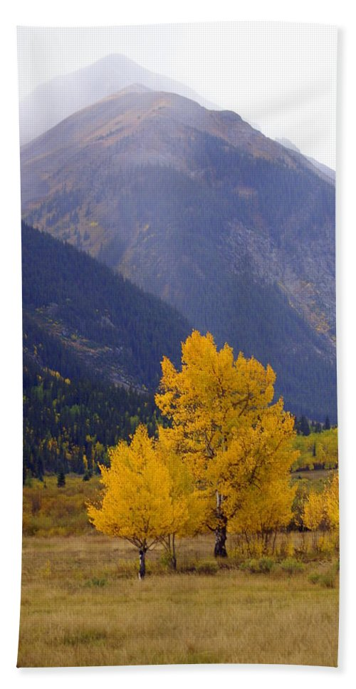 Fall Colors Bath Sheet featuring the photograph Aspen Fall 4 by Marty Koch