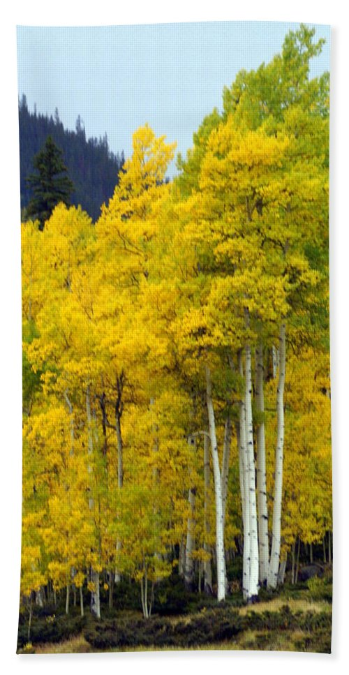 Fall Colors Bath Sheet featuring the photograph Aspen Fall by Marty Koch