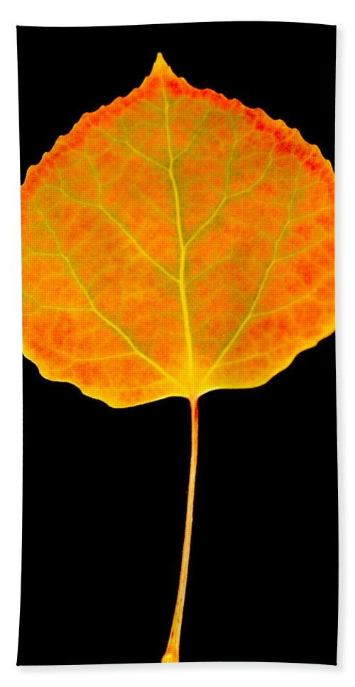Leaf Bath Sheet featuring the photograph Aspen Leaf Glory by Marilyn Hunt