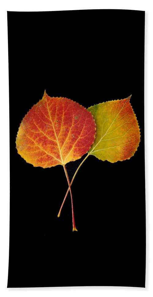 Leaves Bath Towel featuring the photograph Aspen Leaves by Carol Milisen