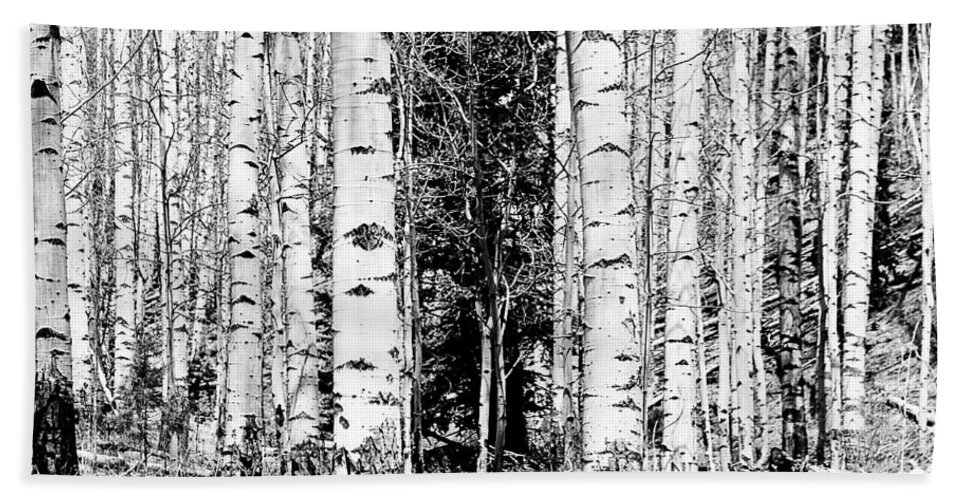 Black And White Hand Towel featuring the photograph Aspens And The Pine Black And White Fine Art Print by James BO Insogna